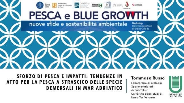 SFORZO DI PESCA E IMPATTI: TENDENZE IN ATTO PER LA PESCA A STRASCICO DELLE SPECIE DEMERSALI IN MAR ADRIATICO Tommaso Russo...