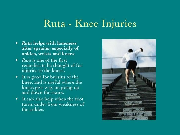 Ruta - Knee Injuries <ul><li>Ruta  helps with lameness after sprains, especially of ankles, wrists and knees . </li></ul><...