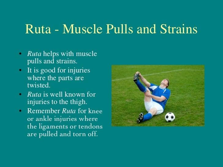 Ruta - Muscle Pulls and Strains <ul><li>Ruta  helps with muscle pulls and strains. </li></ul><ul><li>It is good for injuri...