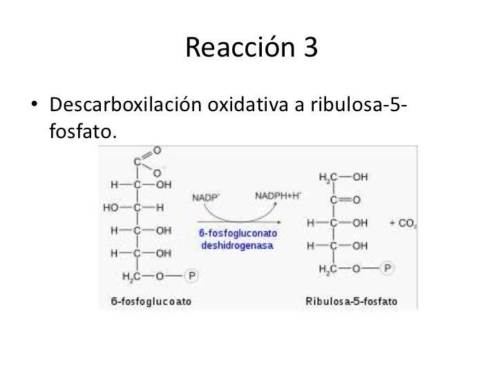 ciclo de calvin proceso anabolico o catabolico
