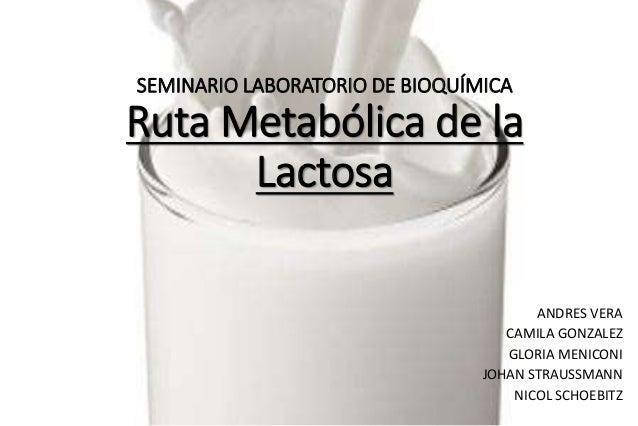 SEMINARIO LABORATORIO DE BIOQUÍMICA Ruta Metabólica de la Lactosa ANDRES VERA CAMILA GONZALEZ GLORIA MENICONI JOHAN STRAUS...