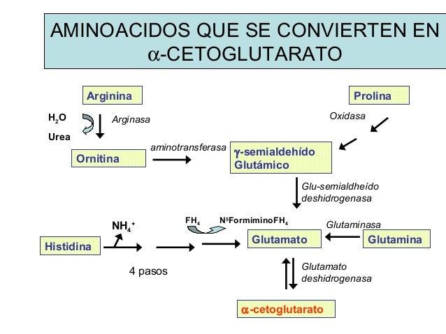 Prácticas para calculadora metabolismo basal harris benedict