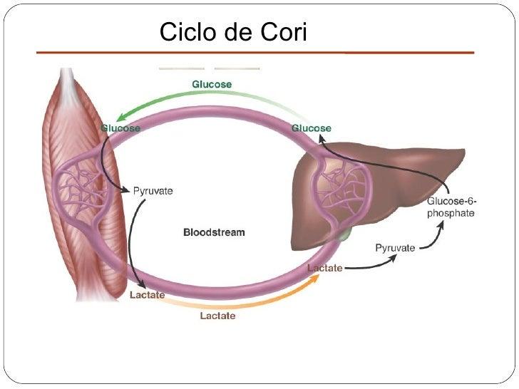 ciclo propionato de testosterona x stanozolol
