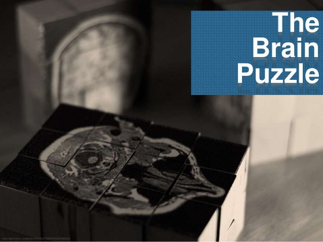 The Brain Puzzle http//www.flickr.com/photos/8195355@N04/3229388336/
