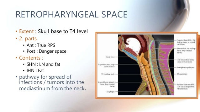 CT anatomy of Neck Spaces RV