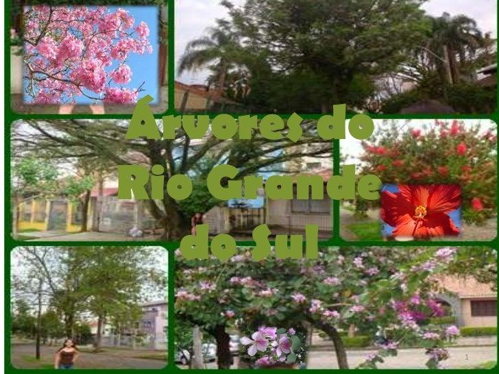 Árvores doRio Grande  do Sul             1