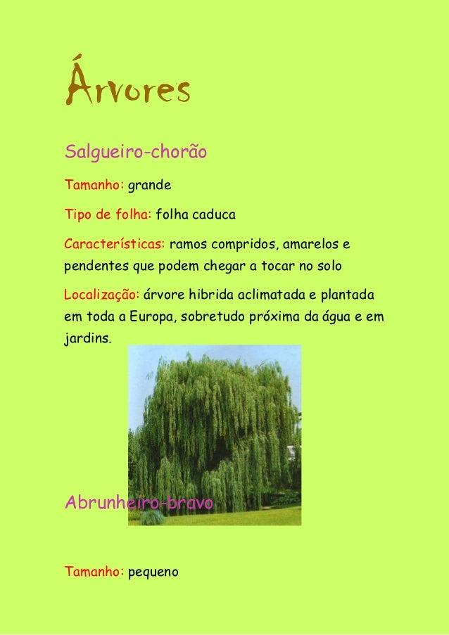 Árvores Salgueiro-chorão Tamanho: grande Tipo de folha: folha caduca Características: ramos compridos, amarelos e pendente...