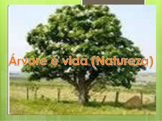 Árvore, fonte de vida    Fonte de amorFonte de sobrevivência Para aqueles que têm      consciência