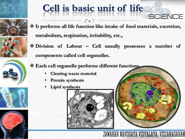 cell the unit of life Subject area: plant and animal cells age or grade: 10th/11th grade biology estimated length: 3 class blocks (or ~ 4 hr, over 2 days.