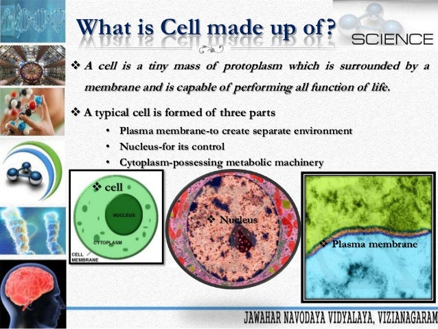 Animal Cells: Smallest Units of Life