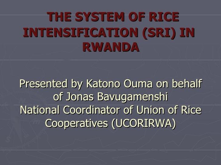 THE SYSTEM OF RICE INTENSIFICATION (SRI) IN  RWANDA Presented by Katono Ouma on behalf of Jonas Bavugamenshi National Coor...