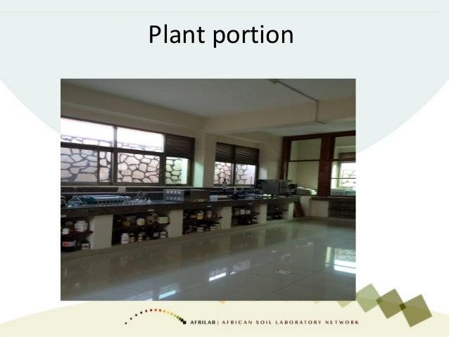 Plant portion