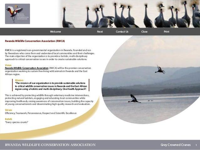 1RWANDA WILDLIFE CONSERVATION ASSOCIATION Grey Crowned Cranes Rwanda Wildlife Conservation Association (RWCA) RWCA is a r...
