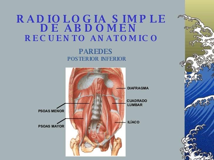 RADIOLOGIA SIMPLE DE ABDOMEN    RECUENTO ANATOMICO   PAREDES  POSTERIOR   INFERIOR DIAFRAGMA CUADRADO ILÍACO PSOAS MENOR P...