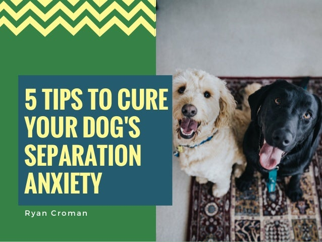 5 TIPS TO CURE YOUR DOG'S SEPARATION ANXIETY  Ryan Croman
