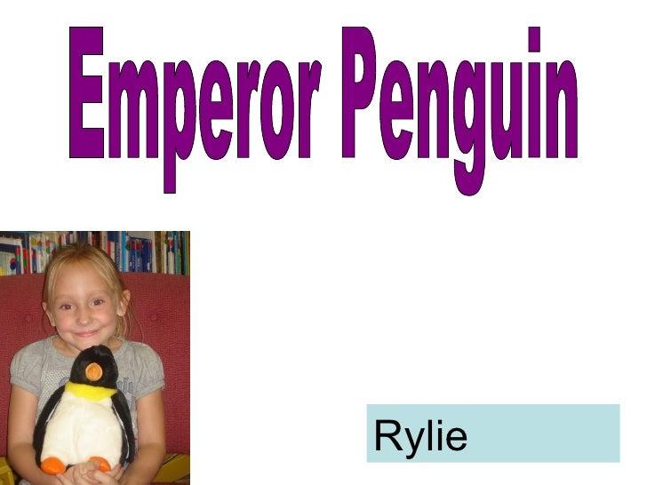 Emperor Penguin Rylie