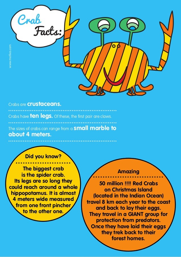 Crab                     Facts:www.motlies.com Crabs are crustaceans. Crabs have ten         legs. Of these, the first pai...