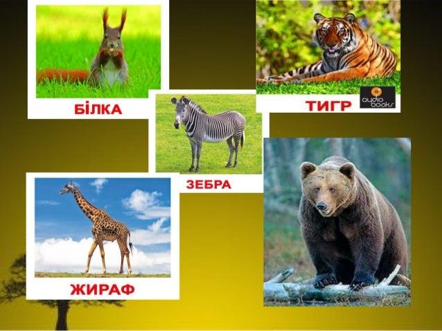 Різноманітність тварин у природі.