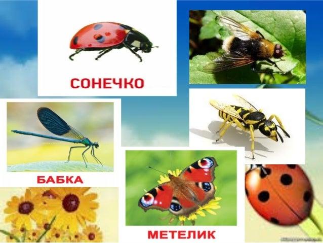 Риби  Риби — холоднокровні тварини. Органи дихання риб — зябра. Відділи тіла риб - голова, тулуб, хвіст - плавно переходят...