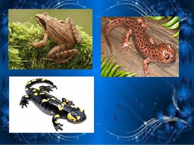 Звірі або Ссавці  Характерні ознаки ссавців: теплокровні, тіло покрите волосяним покривом, живородні, дитинчат вигодовують...