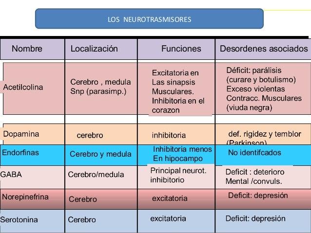 LOS NEUROTRASMISORES  Nombre Localización Funciones Desordenes asociados  Endorfinas Cerebro y medula Inhibitoria menos  E...