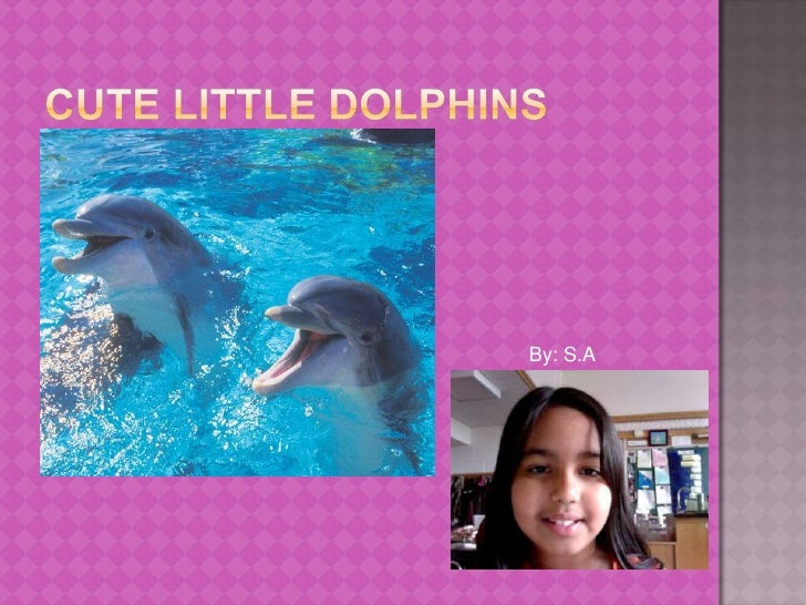 Cute little Dolphins<br />By: S.A<br />