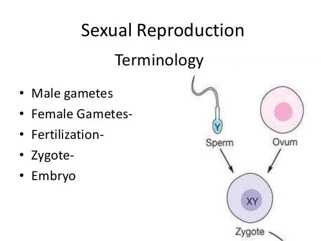 Mbti types sexuality