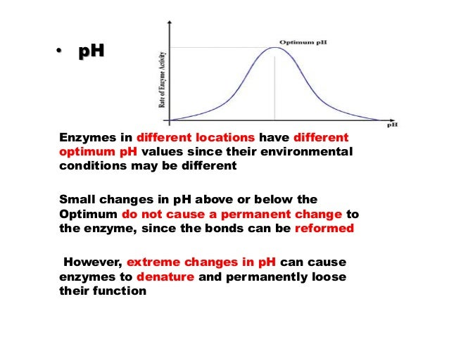 factors that affect enzyme reaction rate Full-text paper (pdf): factors affecting enzyme- catalyzed reactions download citation share download full-text pdf factors affecting enzyme the reaction rate decreases in this region in spite of an excess of -thermal processes are importan t factors in the processing and.