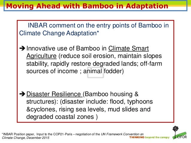 12 thinking beyond the canopy moving ahead with bamboo - Bamboo Canopy 2015