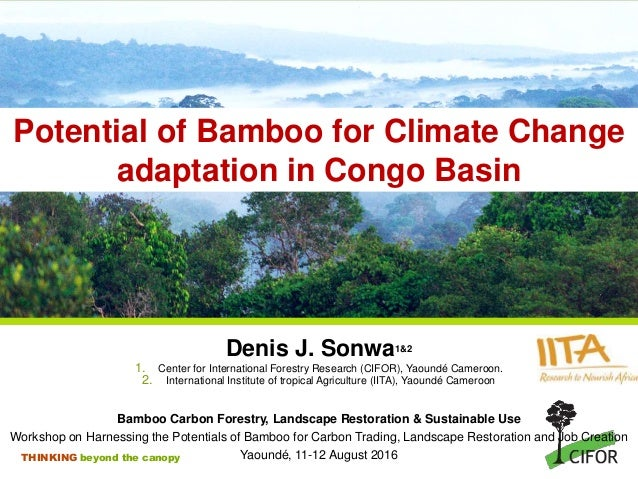 THINKING beyond the canopy Potential of Bamboo for Climate Change adaptation in Congo Basin Denis J. Sonwa1&2 1. Center fo...