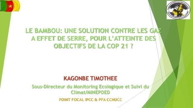 Le bambou une solution contre les gaz a effet de serre pour l attei - Solution radicale contre les souris ...
