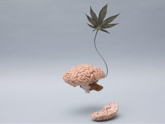 implication du cannabis dans les accidents de la circulation. Black Bedroom Furniture Sets. Home Design Ideas
