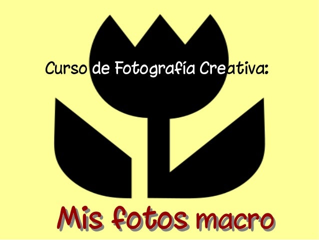 Curso de Fotografía Creativa:  MMiiss ffoottooss mmaaccrroo