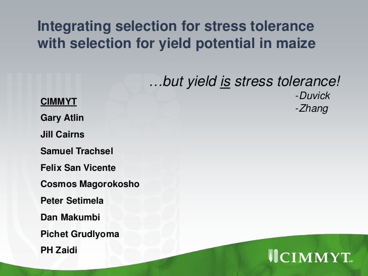 Integrating selection for stress tolerancewith selection for yield potential in maize                     …but yield is st...