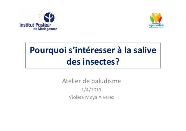 Pourquoi s'intéresser à la salivedes insectes?Atelier de paludisme1/4/2011Violeta Moya Alvarez