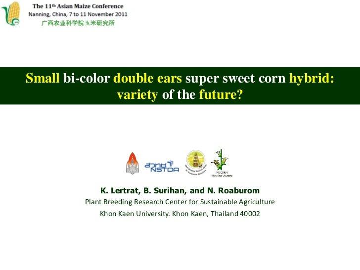 Small bi-color double ears super sweet corn hybrid:               variety of the future?             K. Lertrat, B. Suriha...