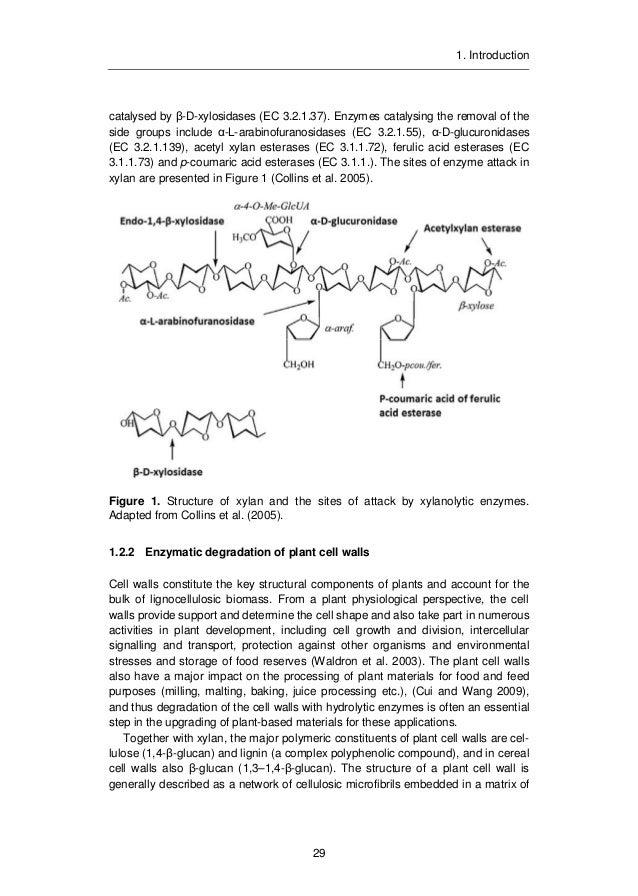 Phd thesis on xylanase