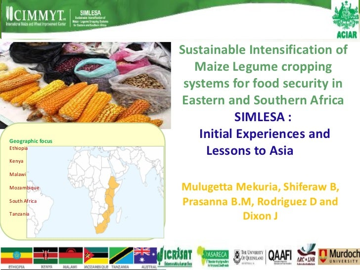 Sustainable Intensification of                      Maize Legume cropping                    systems for food security in ...