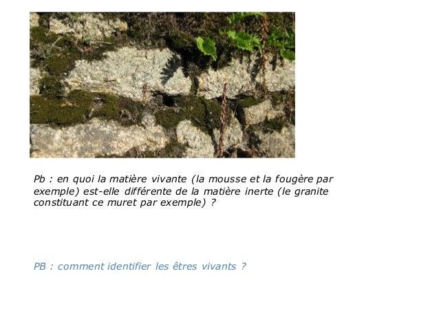 Pb : en quoi la matière vivante (la mousse et la fougère par exemple) est-elle différente de la matière inerte (le granite...