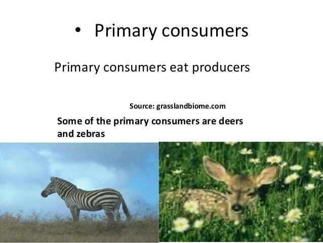 Prairie Grassland Secondary Consumers
