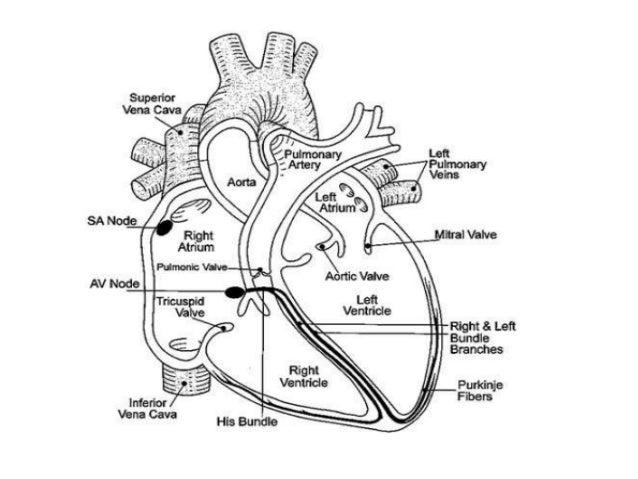 Sa and av nodal bradyarrhythmias and the indication