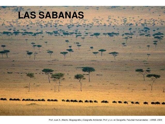 LAS SABANAS     Prof. Juan A. Alberto. Biogeografía y Geografía Ambiental. Prof. y Lic. en Geografía. Facultad Humanidades...