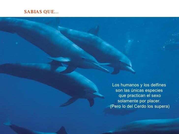 Los humanos y los delfines  son las únicas especies  que practican el sexo solamente por placer.  (Pero lo del Cerdo los s...