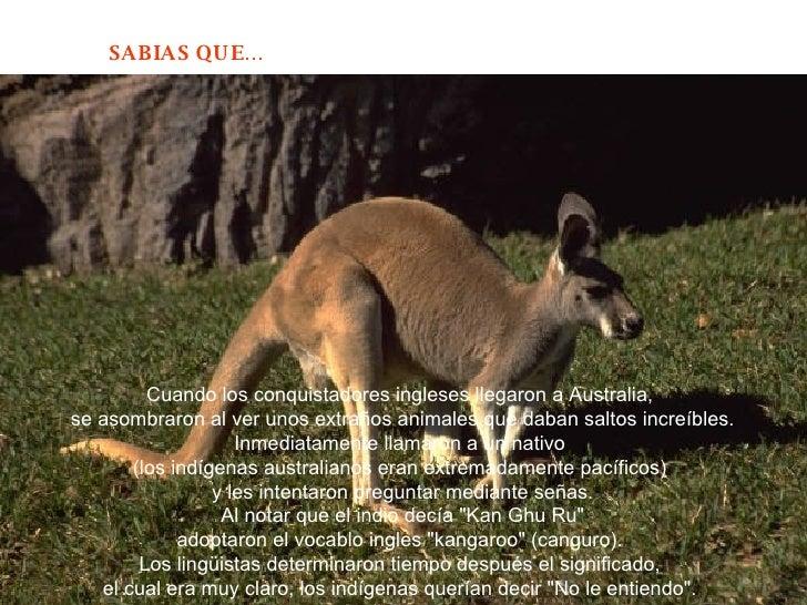 Cuando los conquistadores ingleses llegaron a Australia,  se asombraron al ver unos extraños animales que daban saltos inc...