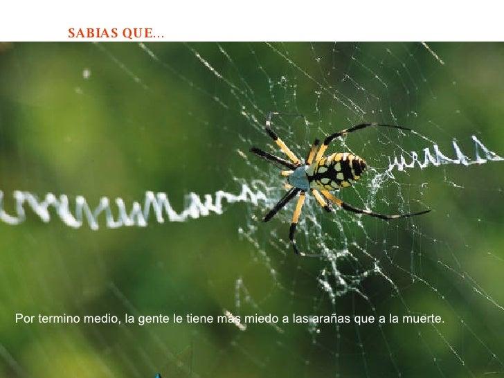 Por termino medio, la gente le tiene más miedo a las arañas que a la muerte.