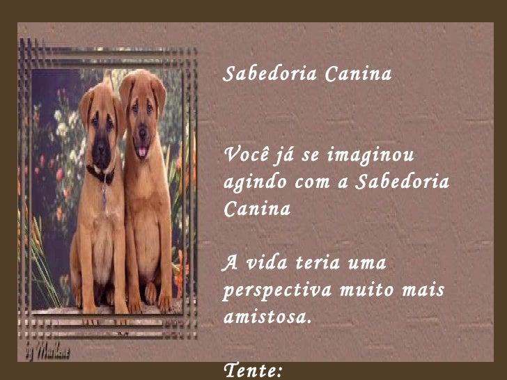 Sabedoria Canina  Você já se imaginou agindo com a Sabedoria Canina  A vida teria uma perspectiva muito mais amistosa.  Te...
