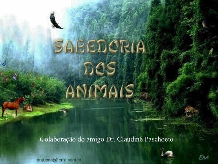 Colaboração do amigo Dr. Claudinê Paschoeto