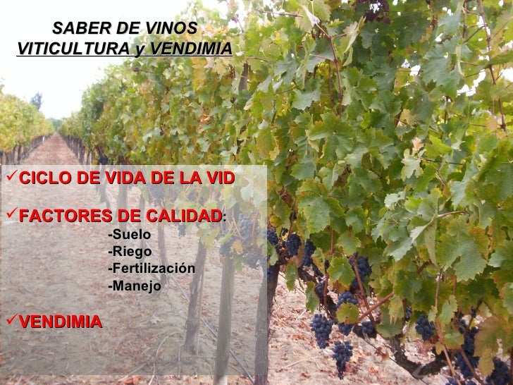 SABER DE VINOS VITICULTURA y VENDIMIA <ul><li>CICLO DE VIDA DE LA VID </li></ul><ul><li>FACTORES DE CALIDAD : </li></ul><u...