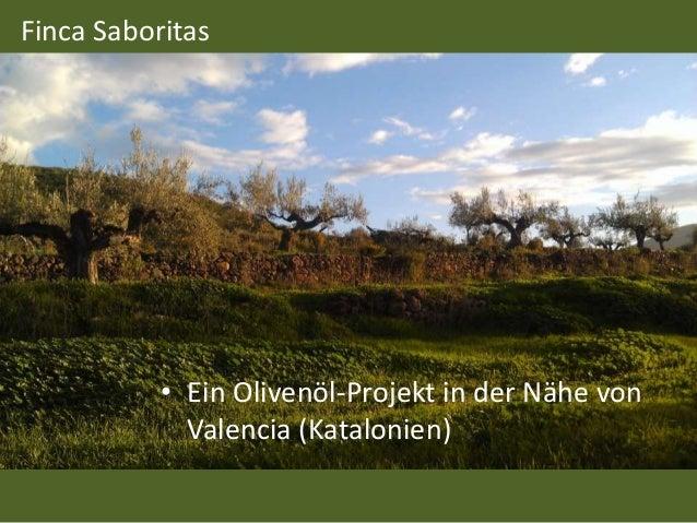 Finca Saboritas • Ein Olivenöl-Projekt in der Nähe von Valencia (Katalonien)