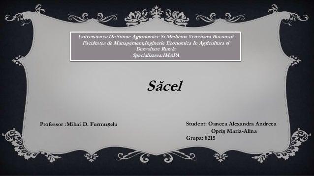 Sacel Marmures